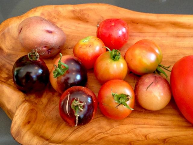 Elizabeth's Indigo Rose tomatoes