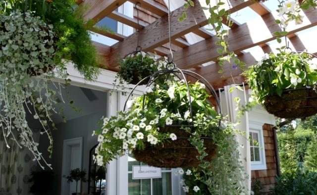 5 Hanging Plants