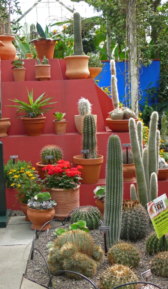 Cactus Pyramid