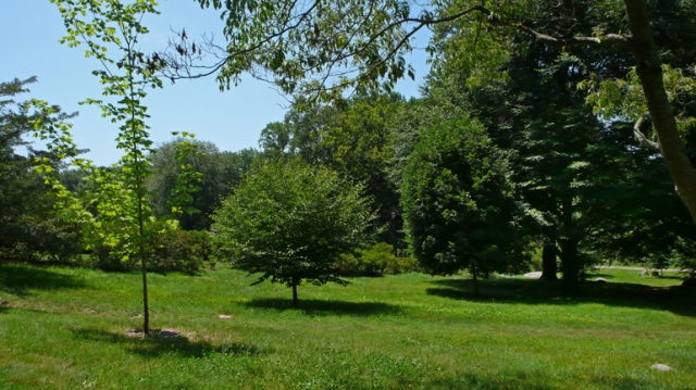 CT Arboretum_20150719_0394