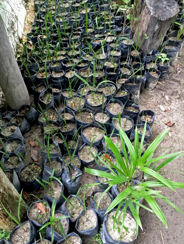 7 Seedlings