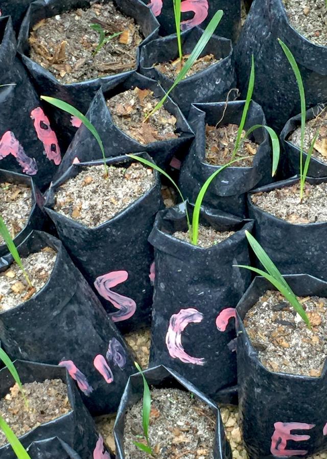 8 My seedling